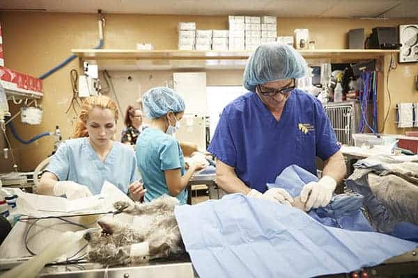 Dr. Jeff & Dr. Petra Young Saving Animal Life