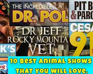 10 Best Animal Shows that You will Love.