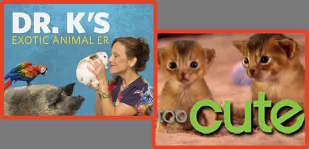 Too Cute!  Animal Planet Dr. K's Exotic Animal